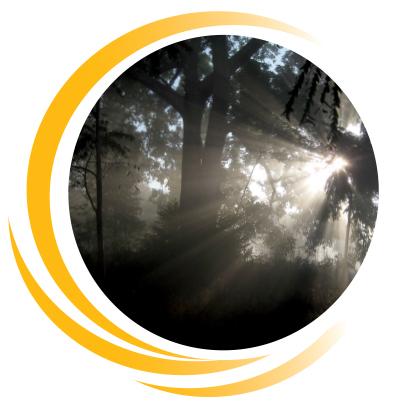 Sonne durchdringt Schatten im Wald, Spuersinn bringt Licht in die Dunkelheit